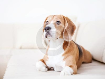 Secrets to a Better Life With Your Dog